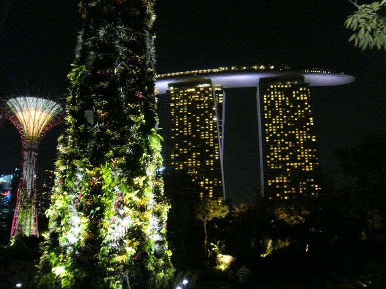 Supertree Grove - Singapore