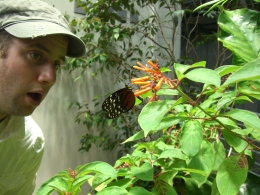 Butterflies were everywhere! - November 2010