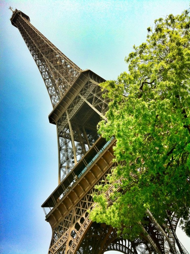 View of Eiffel Tower from Champs de Mars park - Paris