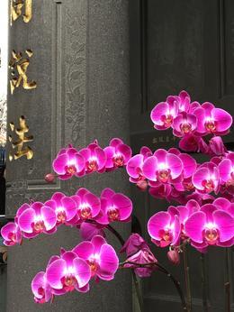 Longshan Temple flowers , dougmoss - December 2016