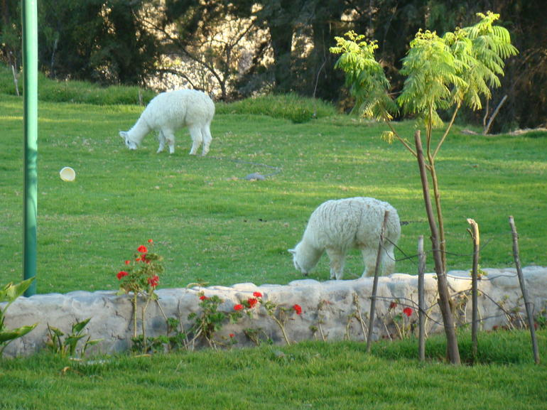 Small-Group Arequipa Countryside Tour Including La Mansion del Fundador -Mirabus