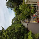 Evite las colas: ferrocarril panorámico de Kuranda, en clase Gold, y teleférico Skyrail sobre la selva tropical, Cairns y el Norte Tropical, AUSTRALIA