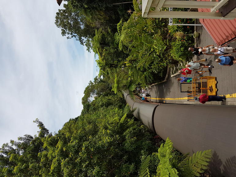 Skip the Line: Kuranda Scenic Railway Gold Class and Skyrail Rainforest Cableway photo 13