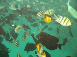 Here's one of my underwater photos I took on the 3rd stop of the day. , David E - November 2012
