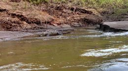 A crocodile enjoying the sun , shauna t - August 2014