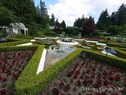 Star Pond , Henry C - July 2014