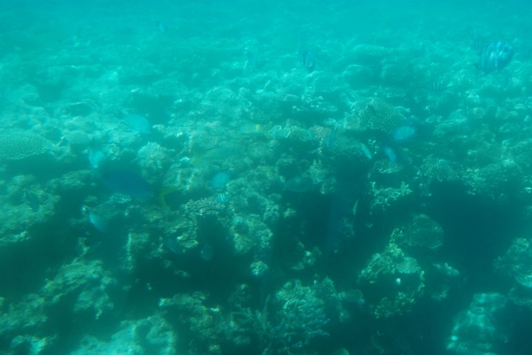 On the semi-submersible submarine - Cairns & the Tropical North