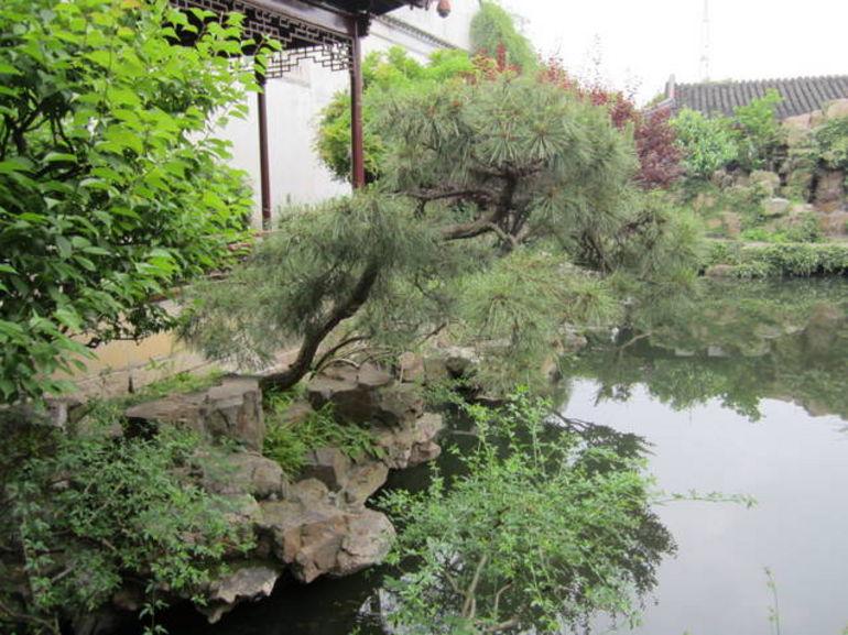 Pond - Shanghai