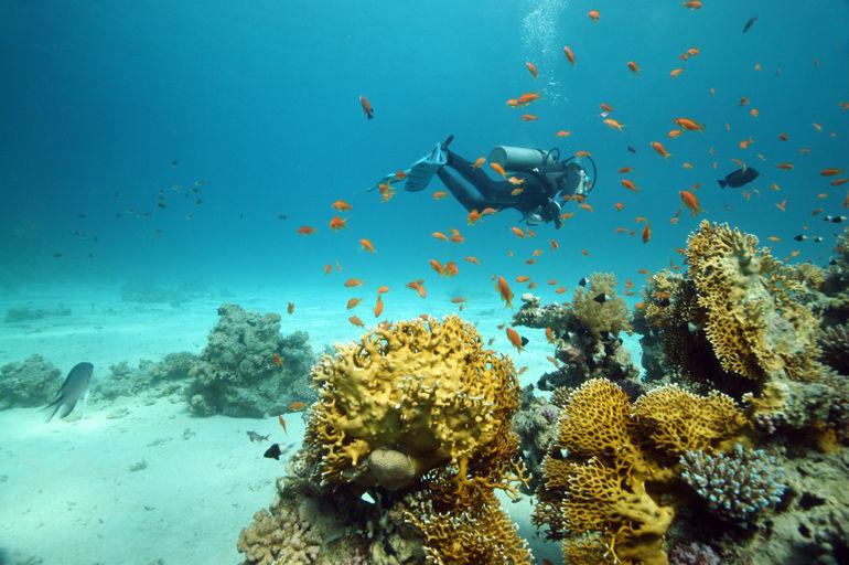 Scuba diving - Nassau