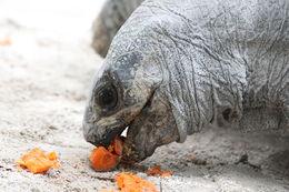 Il est possible de donner à manger à une tortue à des chèvres mais il faut payer une petite participation , jabincorp - September 2014