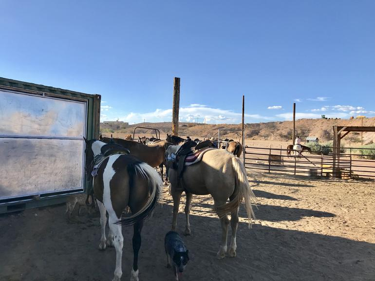 Wild West Sunset Horseback Ride with Dinner from Las Vegas photo 16