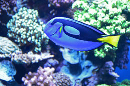 Tremendous aquarium at Monterey - lots of fun for old and young , Diana E - February 2016