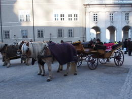 Cart ride around Salzburg , Craig T - January 2017