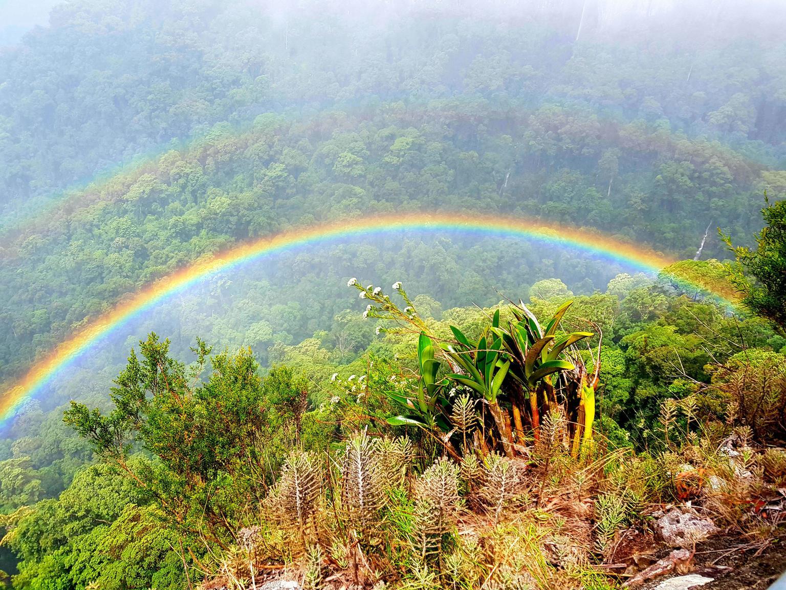 MÁS FOTOS, Small group Gold Coast Mountain Tour: Springbrook National Park and Mt Tamborine