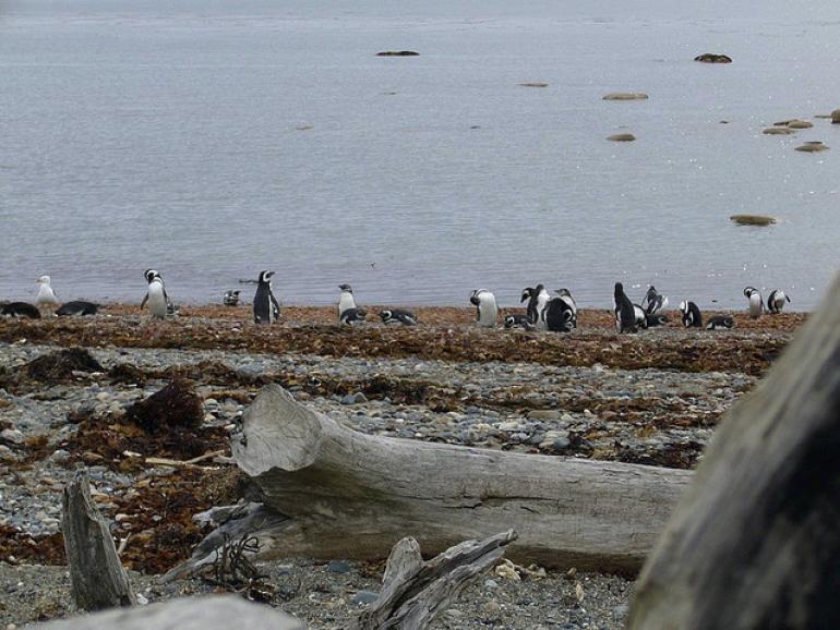 Otway Sound Shore - Patagonia
