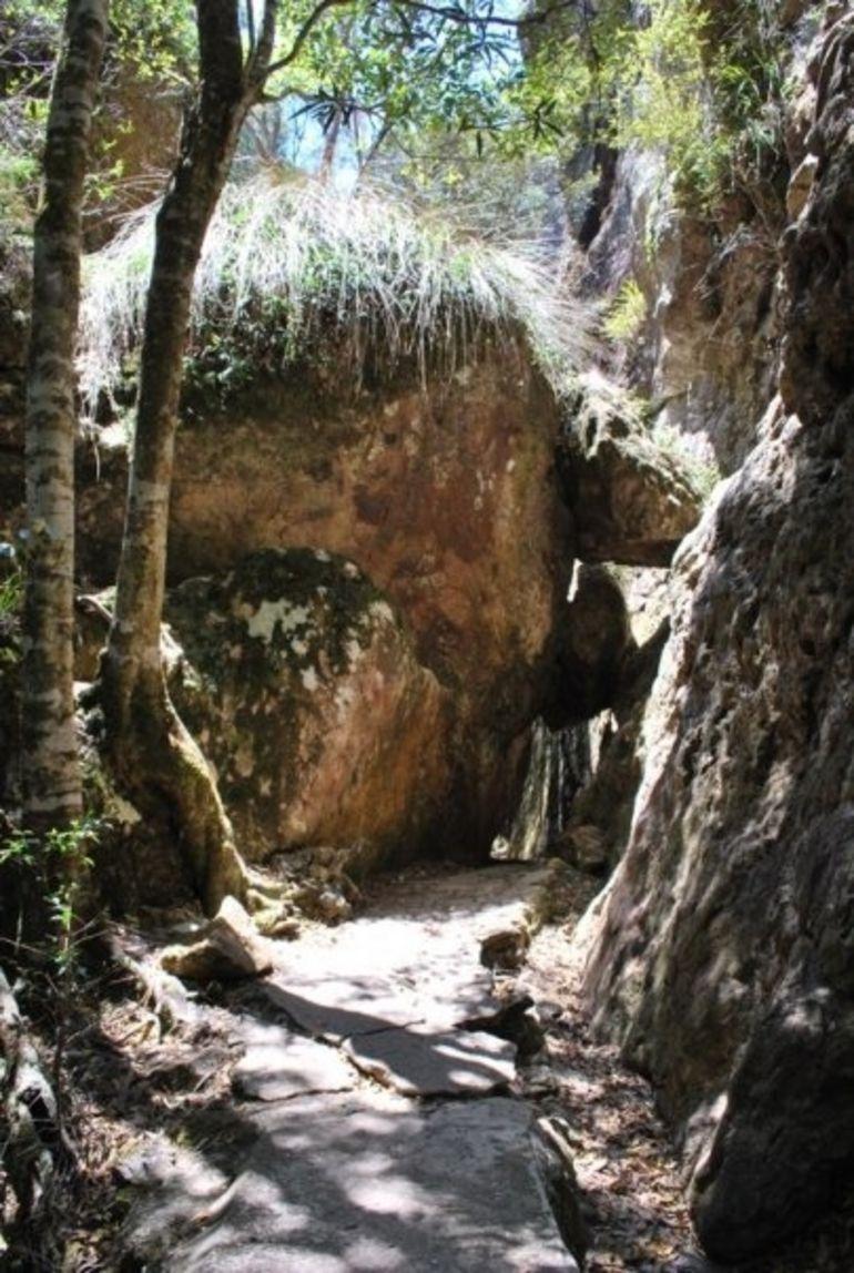 Springbrook National Park - Brisbane