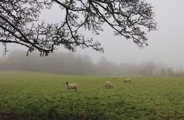 'Locals' in the mist at West Kennett Long Barrow. , Sylvia R - December 2016