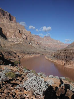 Colorado river , SUSAN H - December 2014