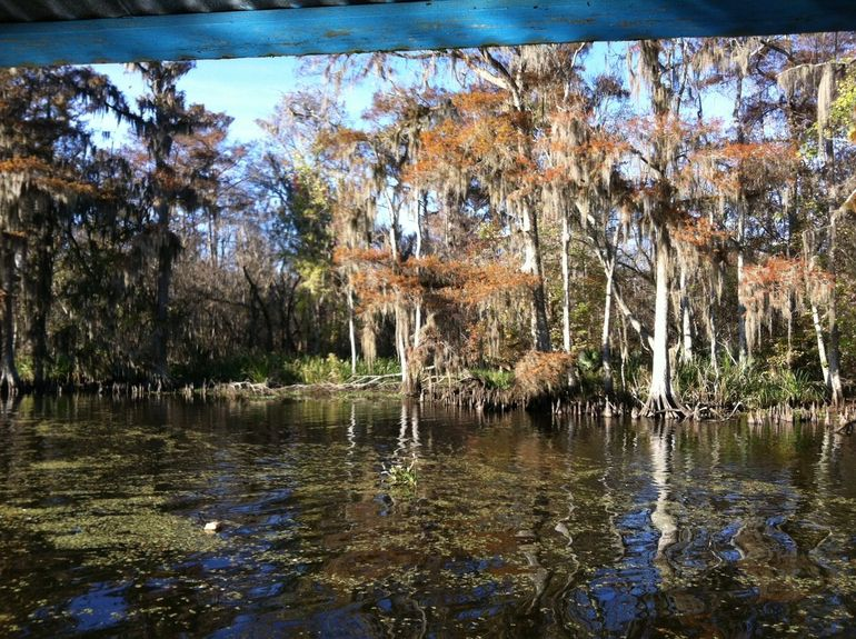 Amazing swamps - New Orleans