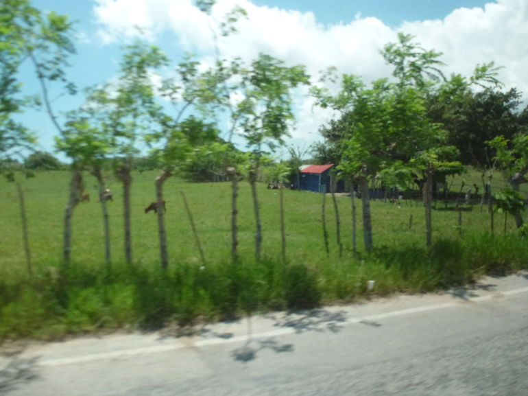 Beautiful Scenery from the Van - Punta Cana