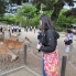 Photo of Tokyo Kyoto and Nara 2-Day or 3-Day Rail Tour by Bullet Train from Tokyo Bowing deer at Nara park