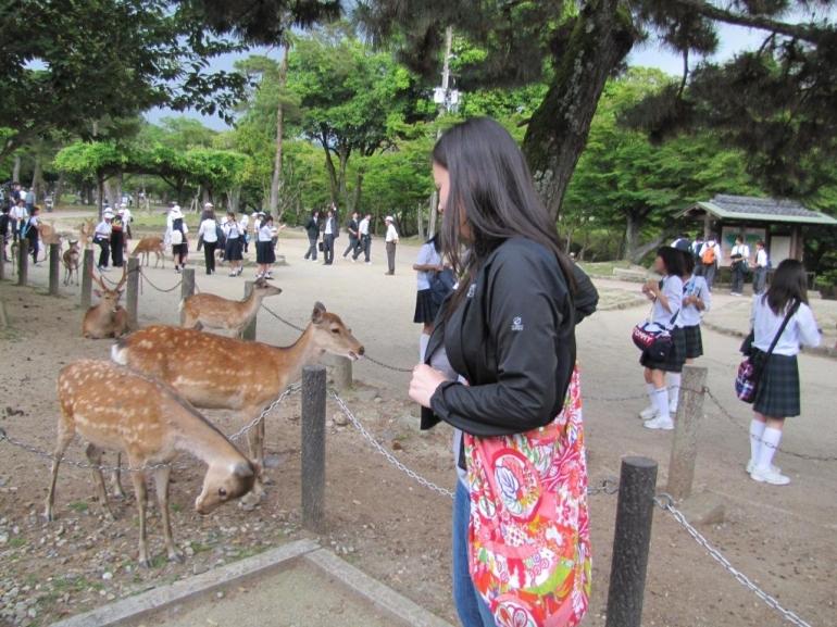 Bowing deer at Nara park - Tokyo