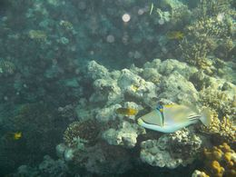 Another underwater photo taken during our great day out , David E - November 2012