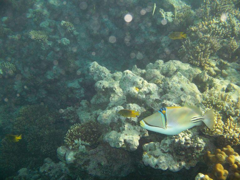Colourful Fish - Hurghada