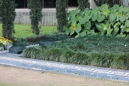 Pablo's grave., Bandit - September 2012