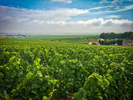 Vineyards of La Maison Penet taken just a few hundred meters from the place we had lunch , Jon C - August 2014