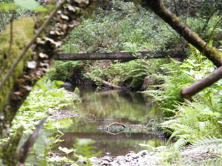 Muir Woods stream - San Francisco