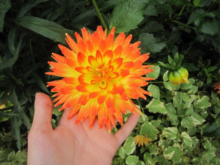 Orange flower - Paris