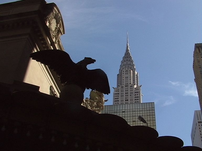 The bald eagle - New York City