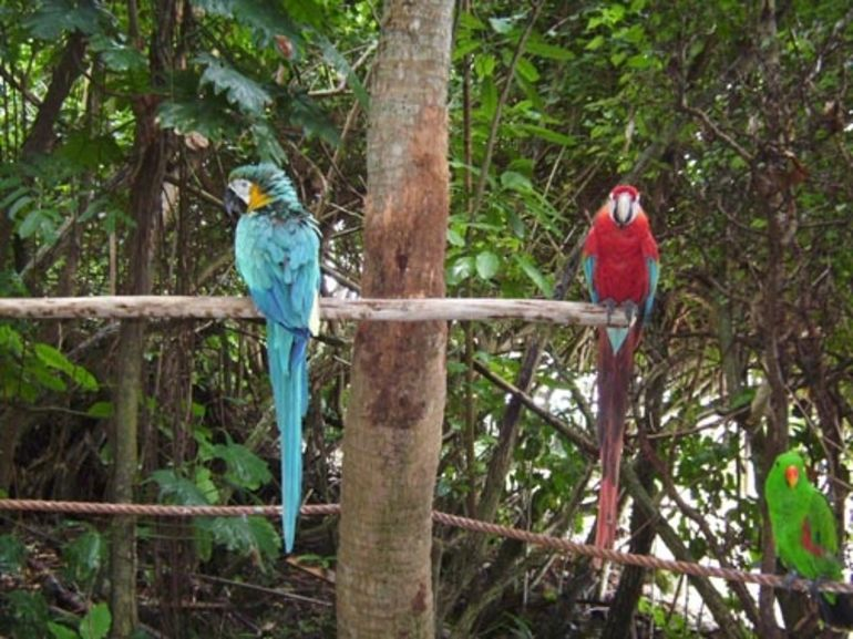 The Jungle Trail - Ocho Rios