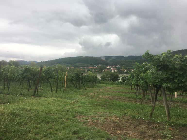 Wachau Valley Wine Tasting Bike Tour from Vienna