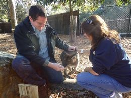 Jon Wright and Michelle Nail petting a wallaby at the Taronga Zoo in Sydney. , Michelle N - June 2013
