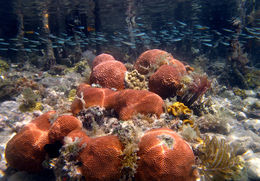 The amazing and one of a kind mangroves in Hurricane Hole. The best snorkeling in Coral Bay! , sailpepper - September 2013