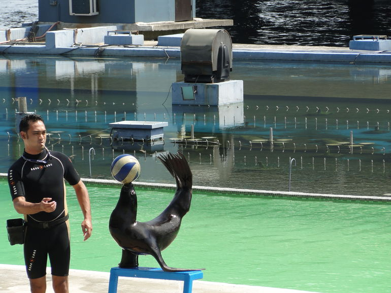 Sea Lion Show - Manila