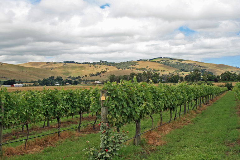 The vineyards at Bass River Winery - Melbourne