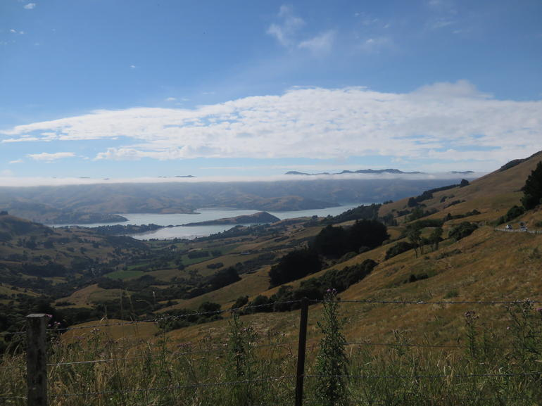 Akaroa Full Day Sightseeing Tour from Christchurch