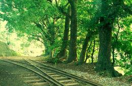 Train tracks in Alishan - July 2012