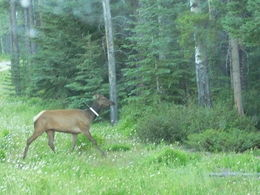 Elk , bill - August 2016
