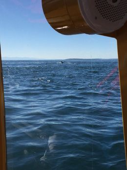 We were able to catch a glimpse of a humpback whale on its deep dive! So amazing!!!! , William R - October 2015