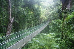 this is exactually as it is, its a brilliant trip to do (i'm a celebrity get me out of here walkway) , paul w - November 2013