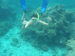 Snorkeling in the Reef was great, next time I will do the dive so I can see even more. , Bobby - October 2012