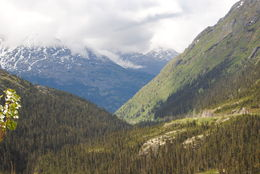 High up in the mountains on the U.S./Canadian border , Allison H - June 2014
