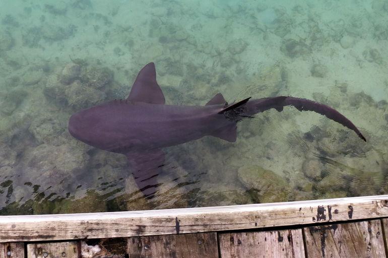Dolphin Cove - Ocho Rios