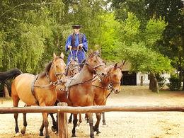 Equestrian show , vvt - June 2014