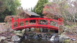 Japanese Garden , David C - June 2014