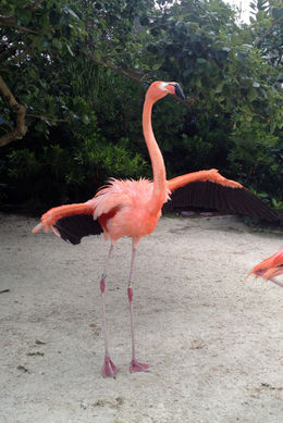 Flamingo, Jules & Brock - July 2012